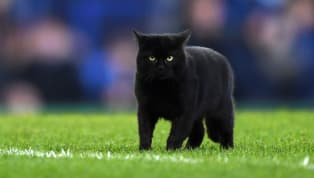 Pitch invaders are like marmite - you either love them or you hate them. A black cat propelled itself to stardom by interrupting proceedings during Everton's...
