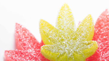Why are cannabis gummies the most popular edible?