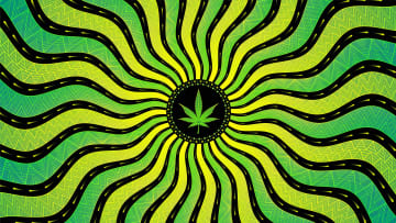 The cannabis LSD strain is celebrated for a reason.