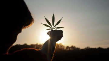 Will the U.S. Cannabis Council serve as a guiding light for this emerging industry?