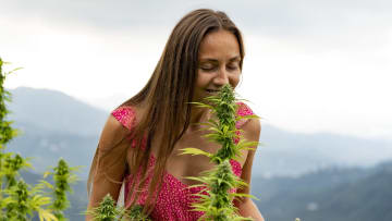 Ready to grow your own cannabis? Where will you plant it?