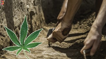 Ancient Cannabis Found in Israel