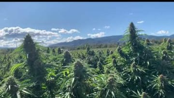 New CBD and Hemp Rules Proposed