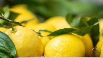 El limón es un remedio eficaz para eliminar las cicatrices de la piel