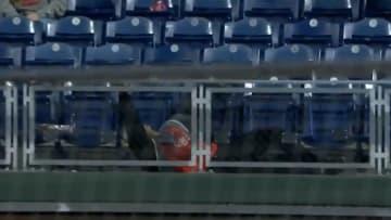 Zack Hample falls chasing a home run ball at Citizens Bank Ballpark