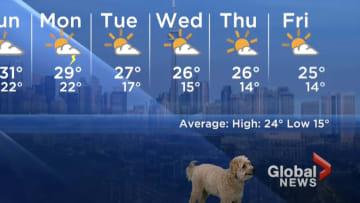 Weather dog.