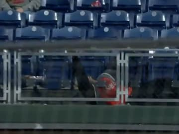 Zack Hample falls chasing a home run ball at Citizens Bank Ballpark
