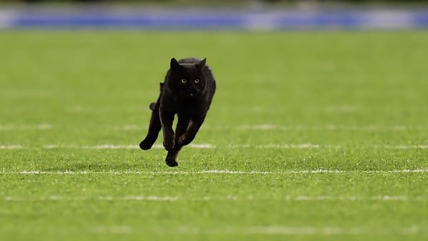 EAST RUTHERFORD, NEW JERSEY - NOVEMBER 04:  A black cat runs on the field during the second quarter of the New York Giants and Dallas Cowboys game at MetLife Stadium on November 04, 2019 in East Rutherford, New Jersey. (Photo by Emilee Chinn/Getty Images)