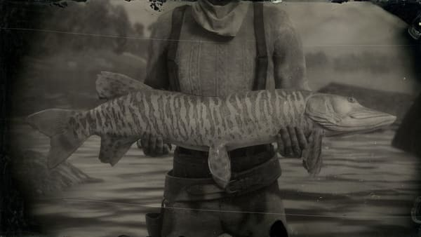 Red Dead Online's Muskie spawn locations are scattered across the northern lakes.