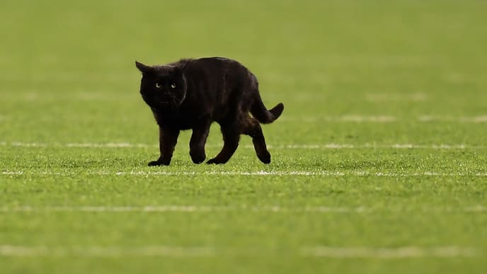 Video Black Cat Interrupts Giants And Cowboys On Monday
