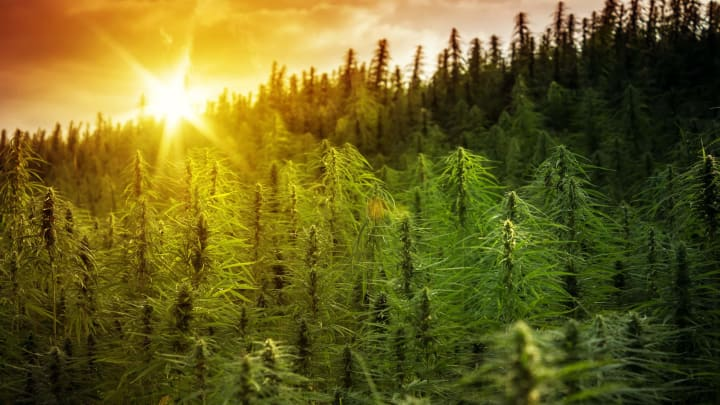 Humankind has made use of cannabis much longer than most people realize.