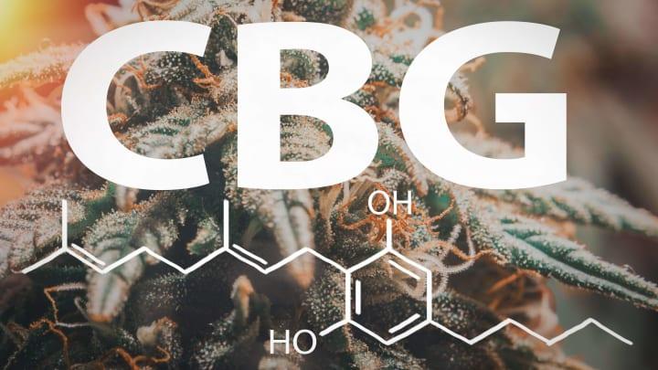 Meet CBG: the mother of all cannabinoids....