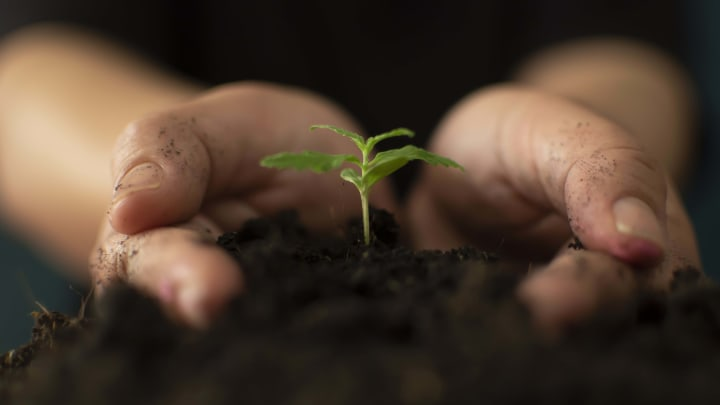 Is living soil cultivation the pathway to an eco-sustainable cannabis industry?