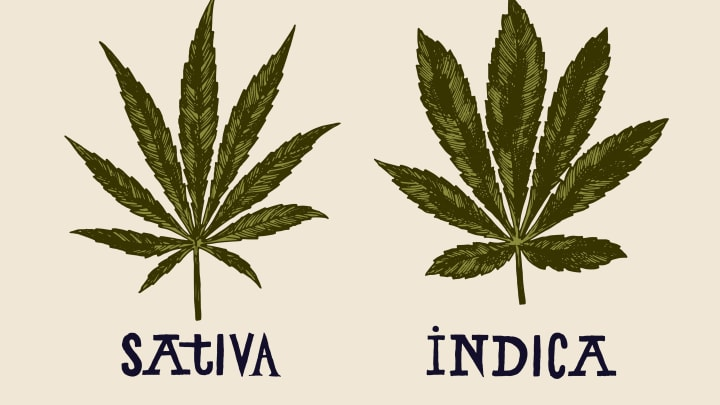 The sativa-indica debacle in cannabis continues to defy science and needs to be addressed.