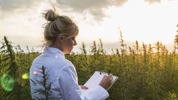 In cannabis, it's the female plant that produces the medicinal compounds which can change lives.