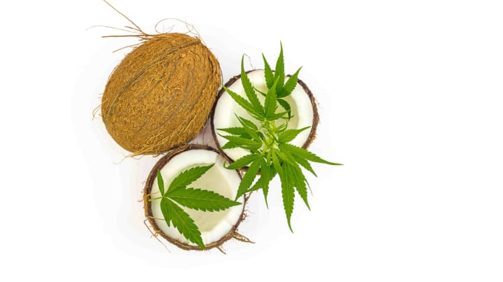 Discover why many people prefer cannabis coconut oil in the kitchen.