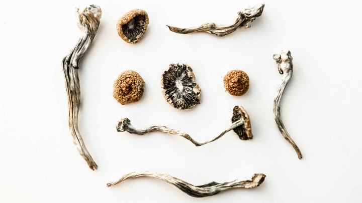 If synthetic psilocybin proves to be just as good as the real thing, what would it mean for the emerging industry?