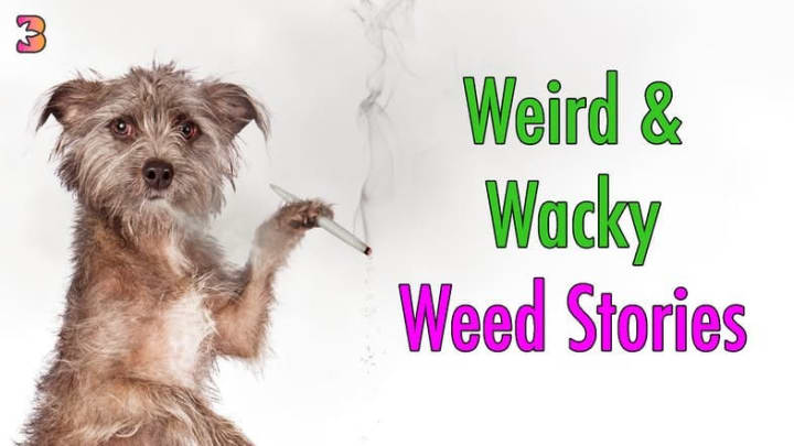 The Bluntness loves to keep an ee on all things cannabis - and to be blunt, some of them are downright strange