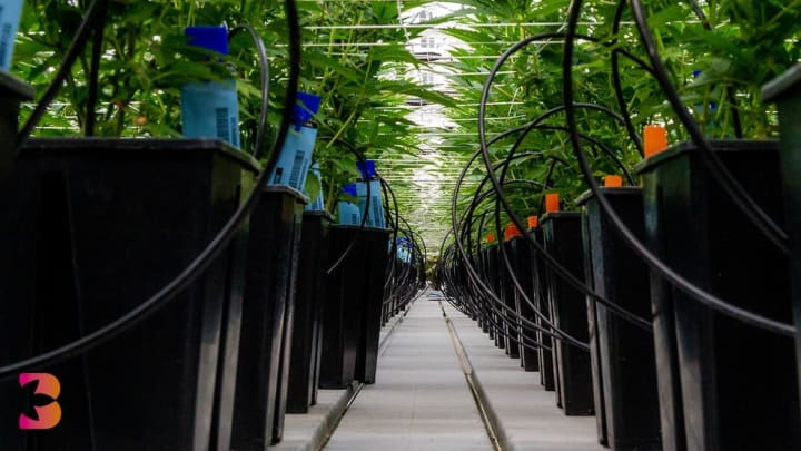 Is hydroponics the key to mitigating pollution?