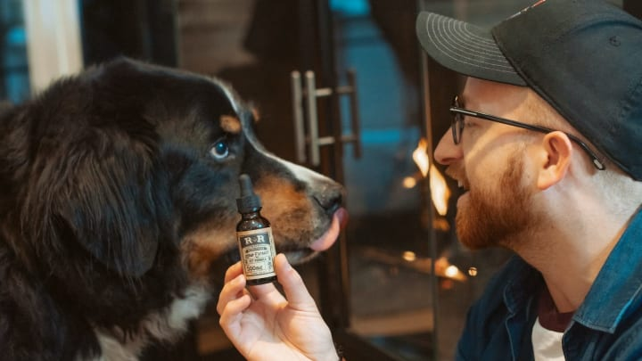 Pets in pain can benefit from CBD.