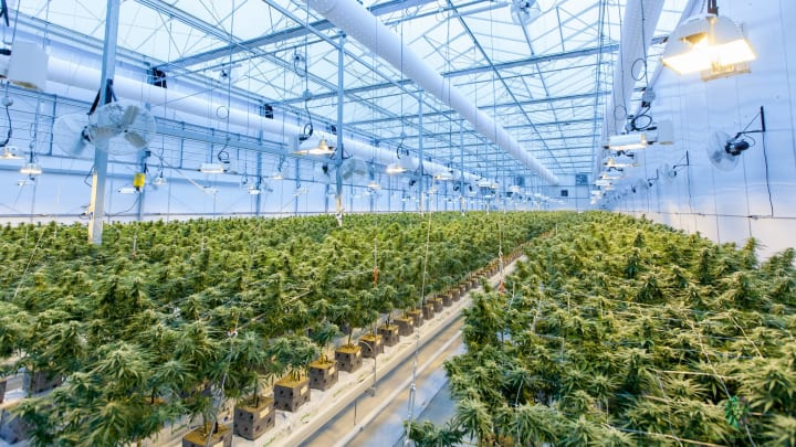 As demand in legal cannabis continues to rise and expand, so too does its environmental footprint.