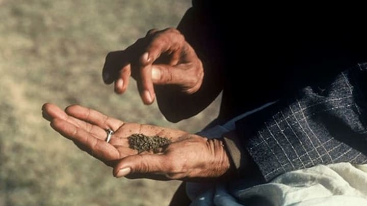 Cannabis is an ancient medicine first used in Central Asia.