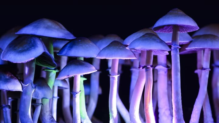 What would happen if everybody had access to psilocybin therapy?