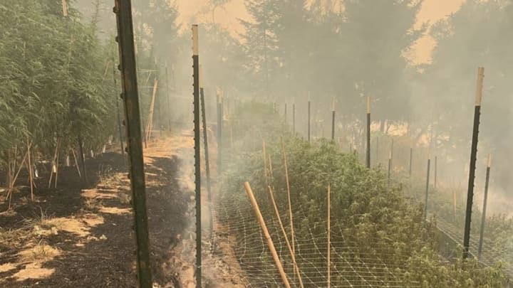Wildfires destroy Sweet Creek Farms in California.