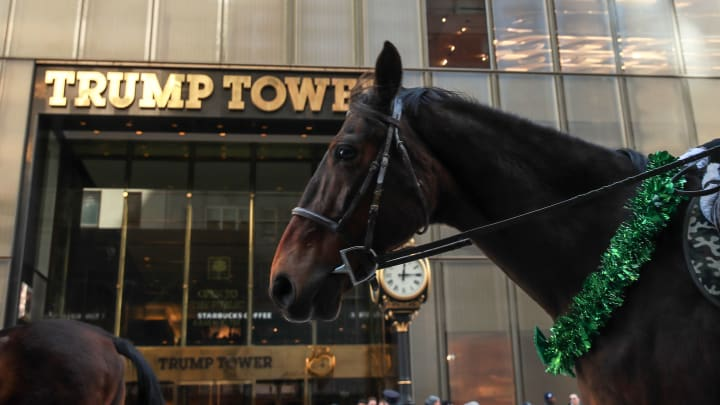 A horse in front of Trump Tower.