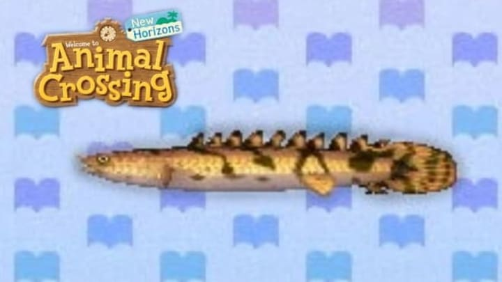 """""""Wow! A saddled bichir! Now I'm saddled with guilt!"""" —New Leaf"""