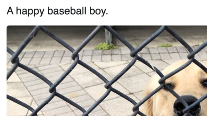 New York Yankee slugger Mike Ford's dog stole our hearts at Spring Training