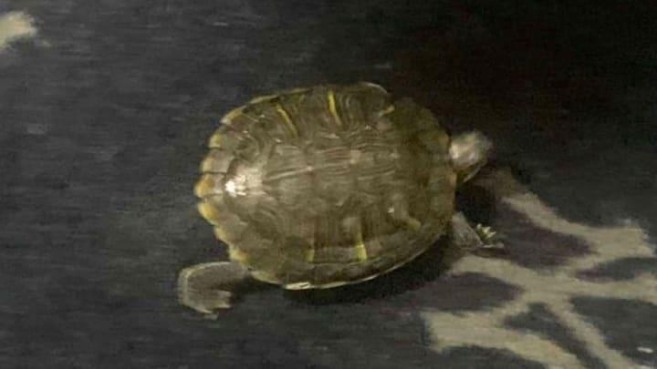 New York Yankees mascot Bronxie the Turtle