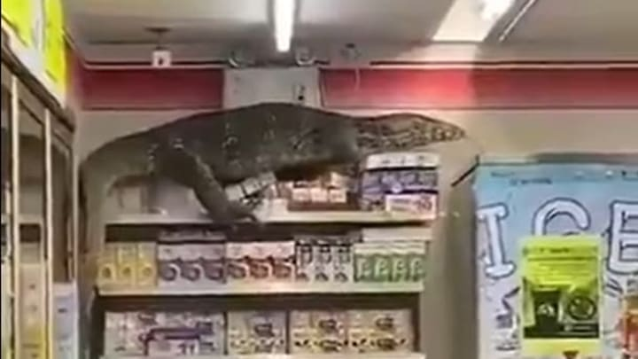 An enormous monitor lizard wreaks havoc on a convenience store in Thailand