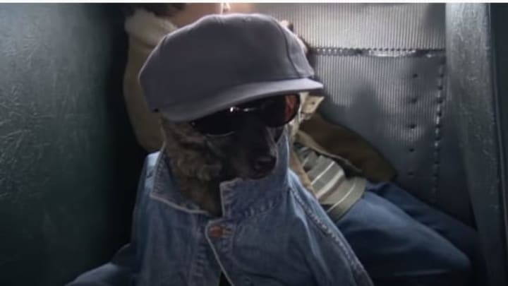 Dog in disguise in the movie 'First Dog.'