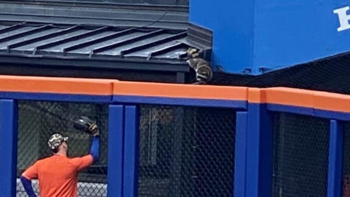 The Mets observe a raccoon at Citi Field.