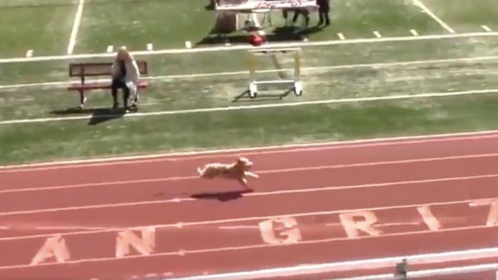 Fast dog.