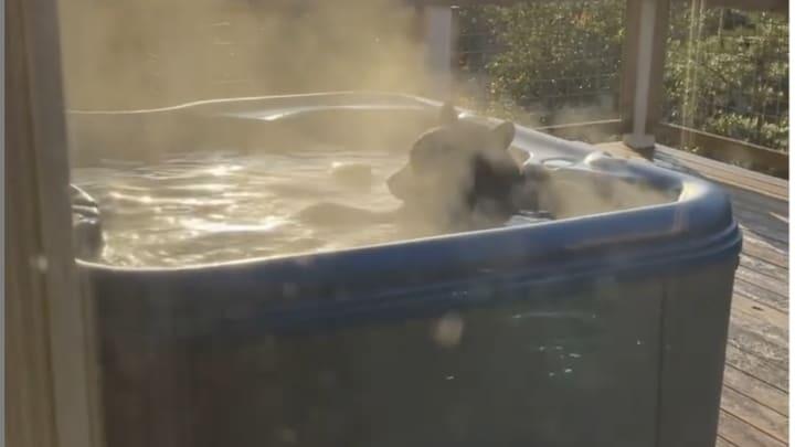 Bear in a hot tub.
