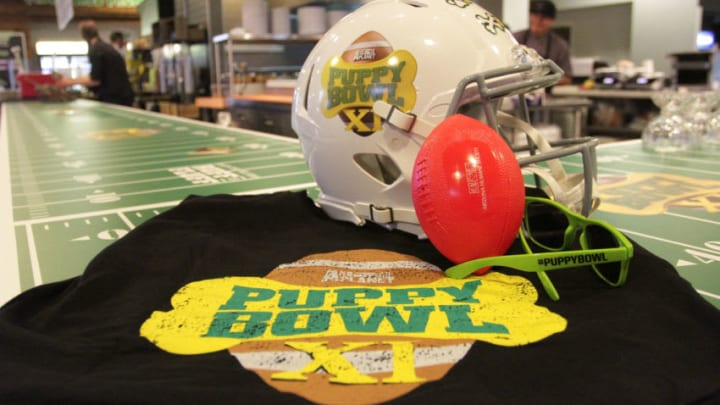 PHOENIX, AZ - JANUARY 29: Atmosphere during the Animal Planet's Puppy Bowl Cafe from Super Bowl Central on January 29, 2015 in Phoenix, Arizona. (Photo by John Parra/Getty Images for Discovery.com)