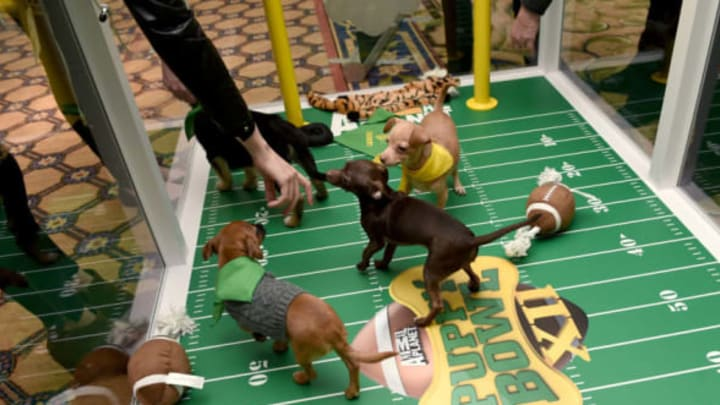 """PASADENA, CA – JANUARY 07: Attendees cuddle with puppies from a local rescue, Paw Works, who are on hand to promote Animal Planet?s ?Puppy Bowl XII"""" during the Discovery Communications TCA Winter 2016 at The Langham Huntington Hotel and Spa on January 7, 2016 in Pasadena, California. (Photo by Amanda Edwards/Getty Images for Discovery Communications)"""