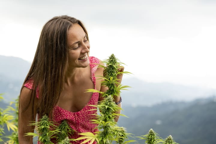 Hemp and cannabis are technically the same thing, but...