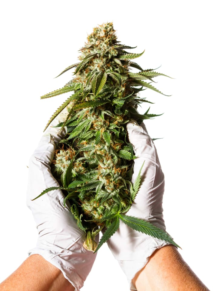 Raw cannabis typically contains very little THC. Instead you get non-psychoactive THCA, which is converted into THC.