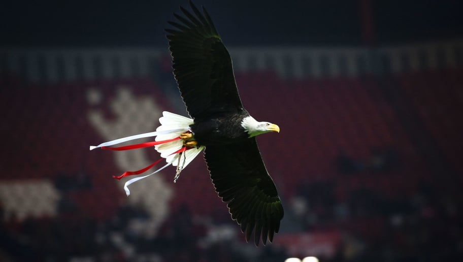 An eagle, mascot of Benfica's team flies over the pitch during the Portuguese Cup football match SL Benfica vs CS Maritimo at the Luz stadium in Lisbon, on November 19, 2016. / AFP / CARLOS COSTA        (Photo credit should read CARLOS COSTA/AFP/Getty Images)