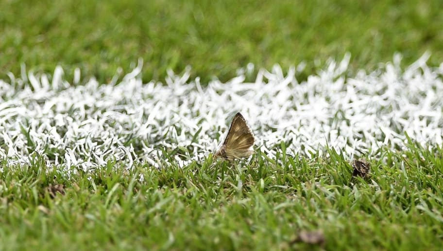 A moth, attracted by the stadium lights, rests on the pitch prior to the start of the Euro 2016 final football match between France and Portugal at the Stade de France in Saint-Denis, north of Paris, on July 10, 2016. The Stade de France was invaded by swarms of moths ahead of the Euro 2016 final between Portugal and France. Hundreds of large black moths flew around the stands of the 80,000-capacity stadium north of Paris as well as by the pitch in temperatures which even at 1830 GMT hovered around 28 degrees Celsius (82 degrees Fahrenheit).  / AFP / MARTIN BUREAU        (Photo credit should read MARTIN BUREAU/AFP/Getty Images)