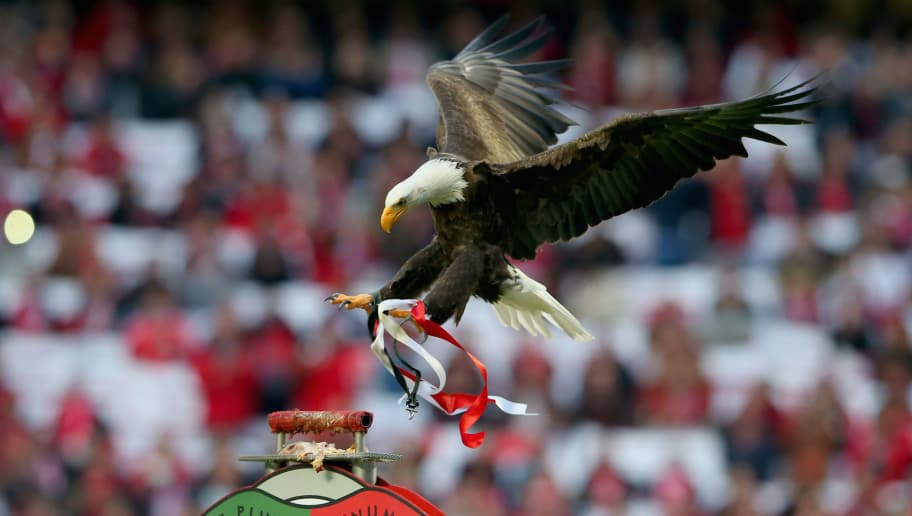 LISBON, PORTUGAL - APRIL 13:  The Benfica eagle arrives prior to the UEFA Champions League quarter final second leg match between SL Benfica and FC Bayern Muenchen at Estadio da Luz on April 13, 2016 in Lisbon, Portugal.  (Photo by Alexander Hassenstein/Bongarts/Getty Images)