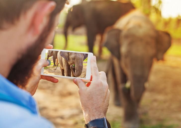 Man taking a picture of an elephant on his mobile phone.