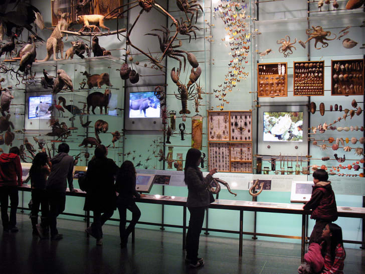 A wall of specimens