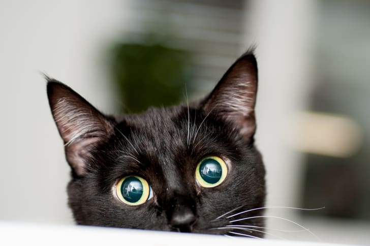 Black cat looks right at the camera