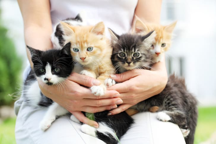 Woman holding a bunch of kittens