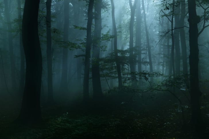 A fog moves through a wooded area