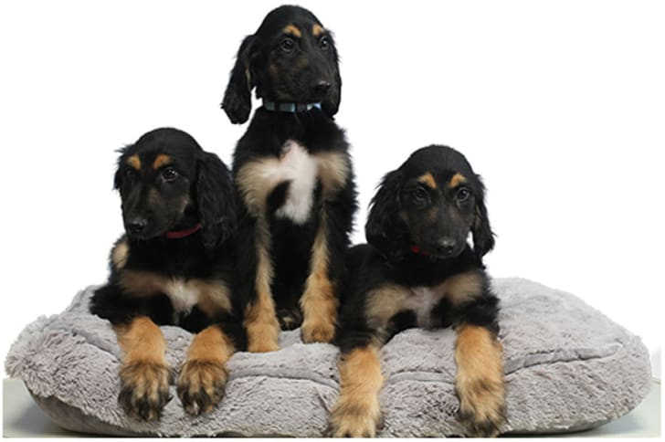 Three puppies sit on a cushion.